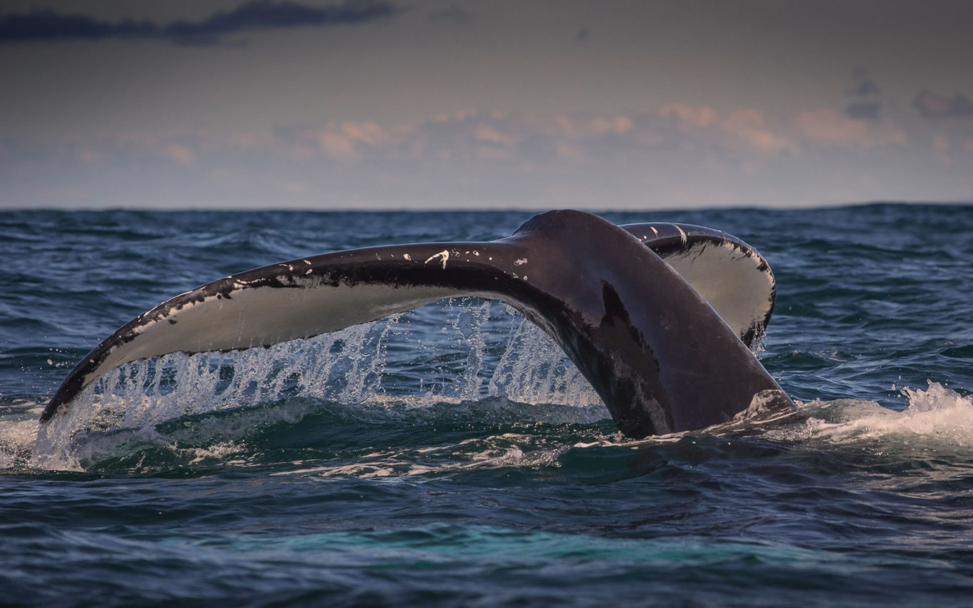 kerrywhalewatching 2016-03-07 at 16.15.45