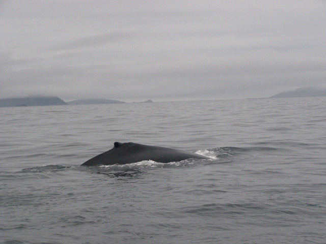 humpback whale and dunmore head
