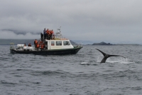 Afternoon Eco Marine Tour (4 hrs)